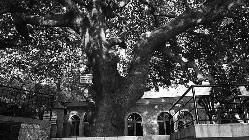 Cultureel Brabant Cubra Bomen Inhoud Bomen Albanië