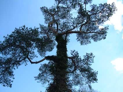 Cultureel brabant cubra bomen zundert vliegden - Moderne tuinier ...