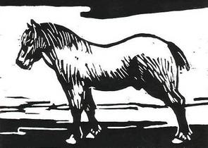 spieren kweken paard